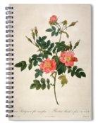 Rosa Rubiginosa Spiral Notebook