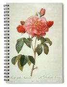 Rose La Duchesse Dorleans Spiral Notebook