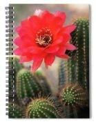 Rose Quartz Cactus Flower  Spiral Notebook