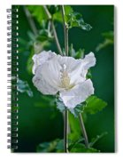 Rose Two Spiral Notebook