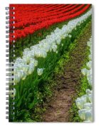 Rows Of White And Red Tulips Spiral Notebook