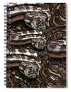 S Is For Snakes Spiral Notebook