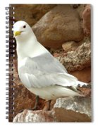 Seagull On Rock Spiral Notebook
