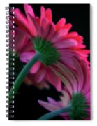Seeking Sunlight Spiral Notebook
