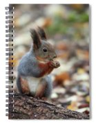 Shadow Boxing. Red Squirrel Spiral Notebook