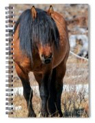 Shaggy Stallion Spiral Notebook