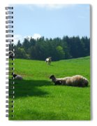 Sheep And Lambs In A Field Spiral Notebook