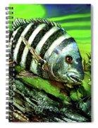 Sheepshead Lunch Spiral Notebook