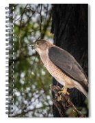 Shikra In The Wild Spiral Notebook