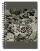 Siesta Sentinel Spiral Notebook