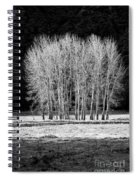 Silver Trees, Yosemite National Park Spiral Notebook