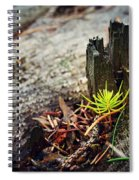 Small Spruce Growing On An Old Tree Stump Spiral Notebook