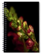 Snapdragon In Red Spiral Notebook
