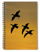 Snow Geese Landing At Sunset Spiral Notebook