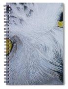 Snowy Owl Spiral Notebook