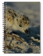 Snowy Plover On The Hunt Spiral Notebook