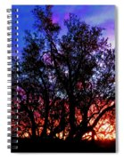 Sonoran Sunrise Ironwood Silhouette Spiral Notebook