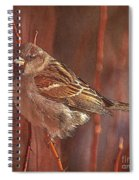 Sparrow In The Sunshine Spiral Notebook