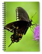 Spicebush Swallowtail Butterfly Spiral Notebook
