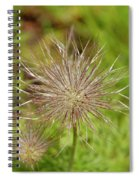 Spiky Plant Pulsatila Halleri Spiral Notebook