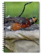 Splish-splash I Was Taking A Bath - American Robin Spiral Notebook