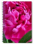 Spring Dahlia Spiral Notebook