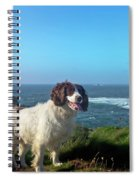 Springer Spaniel Dog In Sennen Cove Spiral Notebook