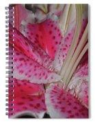 Stargazer Central Spiral Notebook