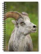 Stone's Sheep Spiral Notebook