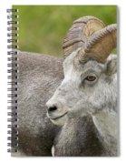 Stone's Sheep Ram Spiral Notebook