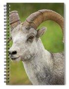 Stone's Sheep Ram Portrait Spiral Notebook