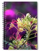 Stream Of Colored Highlights Leads To Yellow Bird Of Paradise Spiral Notebook