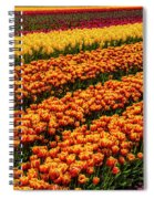 Stunning Rows Of Colorful Tulips Spiral Notebook