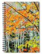 Sugar Maple Acer Saccharum In Autumn Spiral Notebook