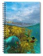 Surf Parrotfish, Damselfish And Basslet Spiral Notebook