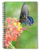 Swallowtail Butterfly Wings  Spiral Notebook