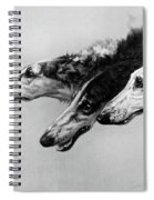 The Borzois, Black And White Sketch, 3 Russian Wolfhounds Spiral Notebook