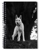 The Dog And The Tree Spiral Notebook