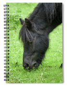 The Grass Is Greener Here. The Black Pony Spiral Notebook