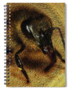 The Killer Bee Spiral Notebook