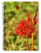 The Spider Lily Spiral Notebook