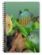 Three Discus Fish Spiral Notebook