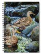 Three Mallard Ducks Swimming In A Stone Filled Brook. Spiral Notebook