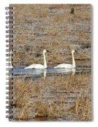 Three Trumpetor Swans 0629 Spiral Notebook
