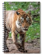 Tiger On A Stroll Spiral Notebook