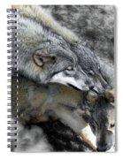 Timber Wolves Up Close Spiral Notebook