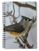 Titmouse Winter Morning Cutie  Spiral Notebook