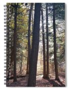 Trees And Shadows  Spiral Notebook