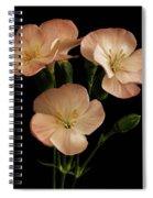 Trio In Pink Spiral Notebook