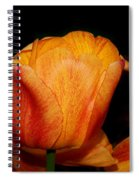 Tulips On A Black Background Spiral Notebook
